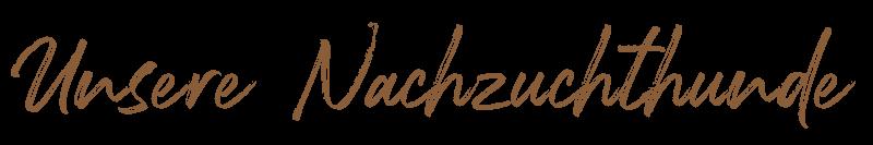 Beschreibung: http://www.zuritamu.de/png/header/nachzuchthunde.png