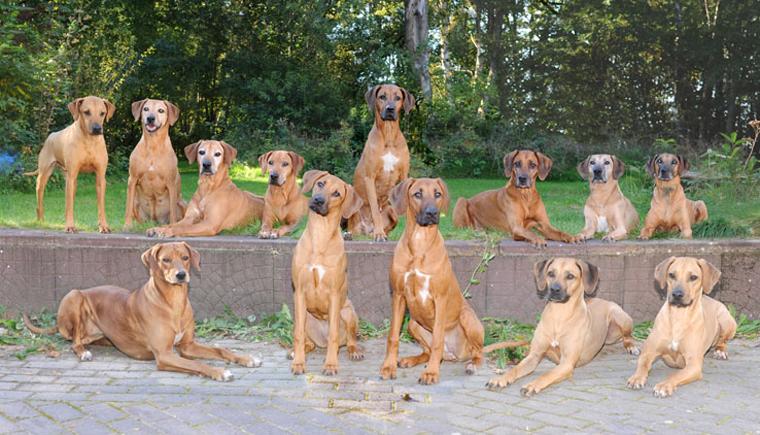Beschreibung: http://www.zuritamu.de/stammhunde/1.png