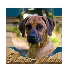 Beschreibung: http://www.zuritamu.de/stammhunde/olavia-mara.png